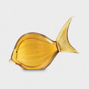 Yellow Gilt-head Bream Fish